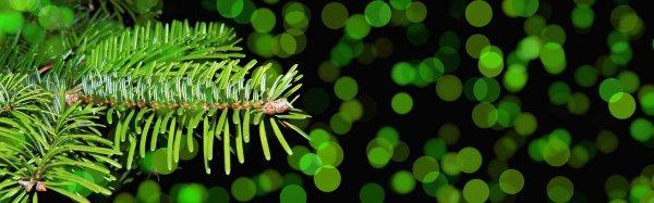 見た目のグリーンクリスマス