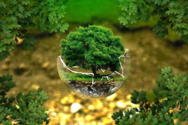 環境のグリーンクリスマス